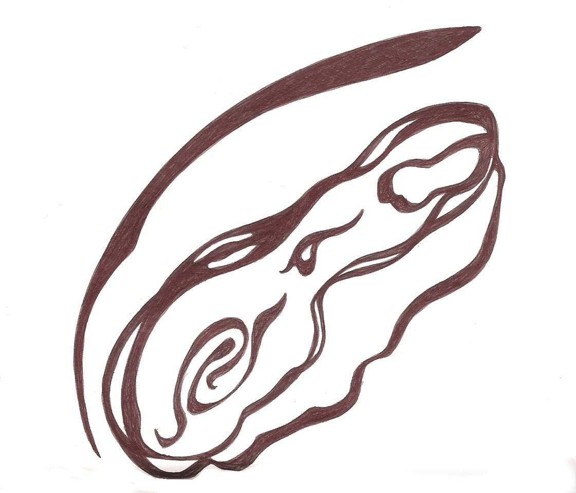 Ladislau da Regueira | Cadernos d'Anotações | O Início da Vida. Apresentação (2008)