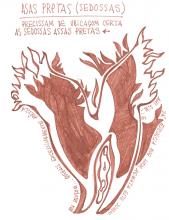 Ladislau da Regueira | Caderno d'Anotações | As sedosas asas pretas (1998)